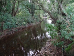 The River Coly